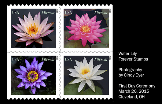 Water-Lily-Stamps